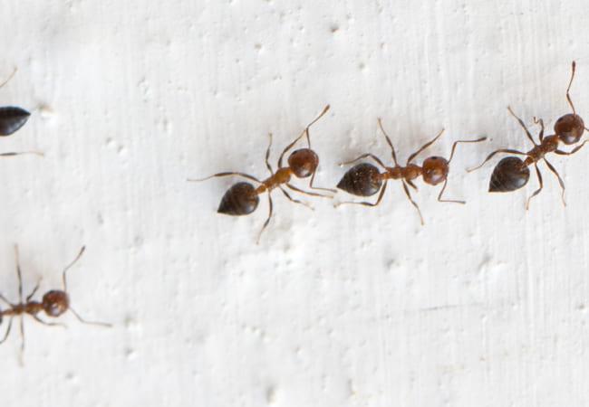 アリの体重計