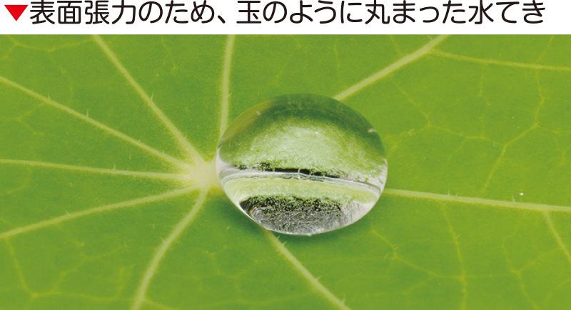表面張力のため、玉のように丸まった水てき