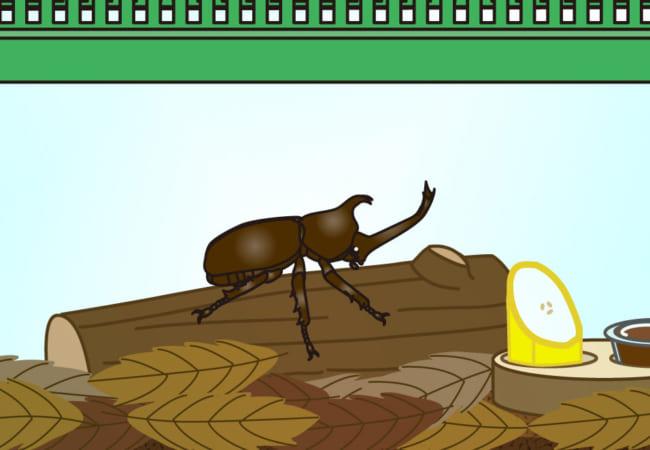 カブトムシの一日観察