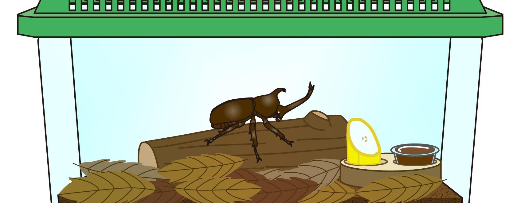 観察 カブトムシの一日観察