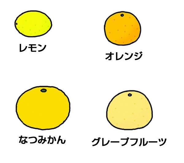 オレンジやみかんのなかま