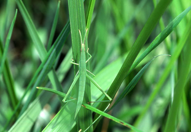 こん虫のすみかと体の色調べ