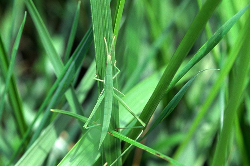 観察 こん虫のすみかと体の色調べ