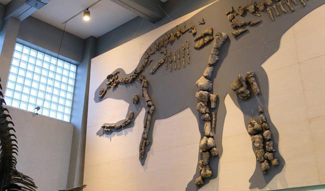 恐竜化石が見つかった<br>北海道むかわ町で化石発くつ