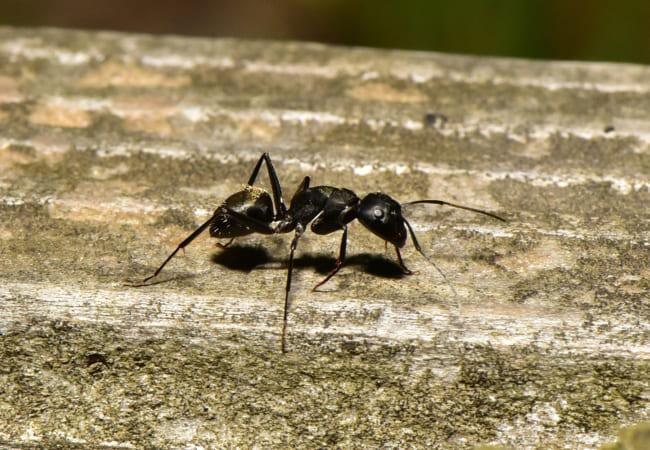 アリの歩くスピード調べ