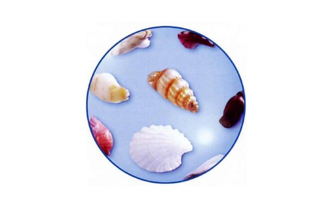 砂浜の宝石・微小貝を観察しよう