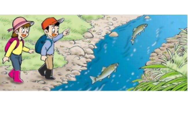 川の魚を観察しよう