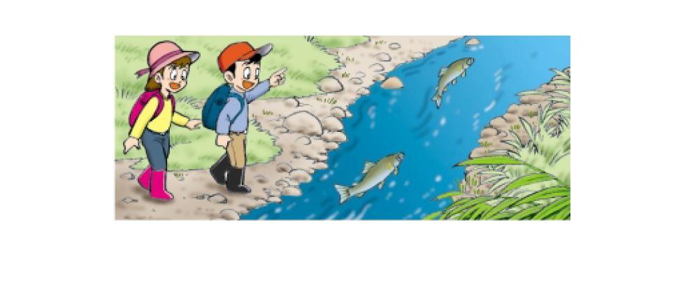 観察 川の魚を観察しよう