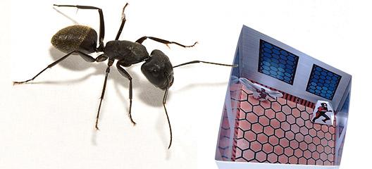 アリの世界で自由研究