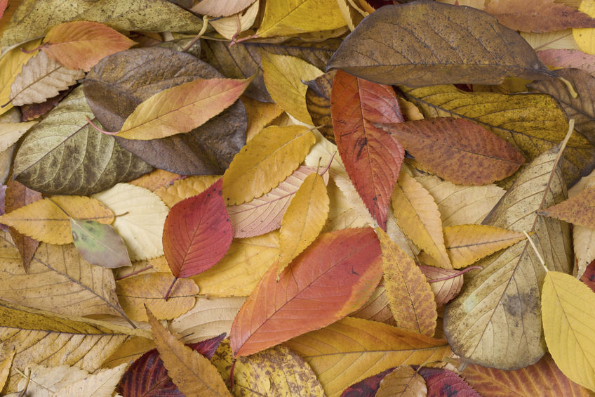 冬の始まりが湿疹を招く/秋 -季節の変わり目‐ になぜ湿疹が悪化するのか【第2回】