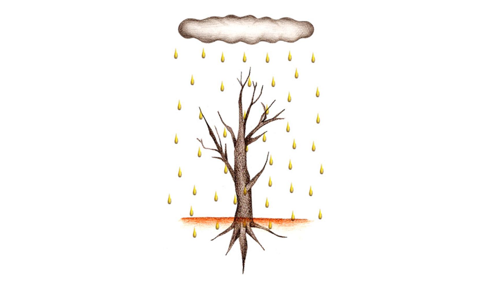 酸性雨がふると、どんなことが起こりますか?