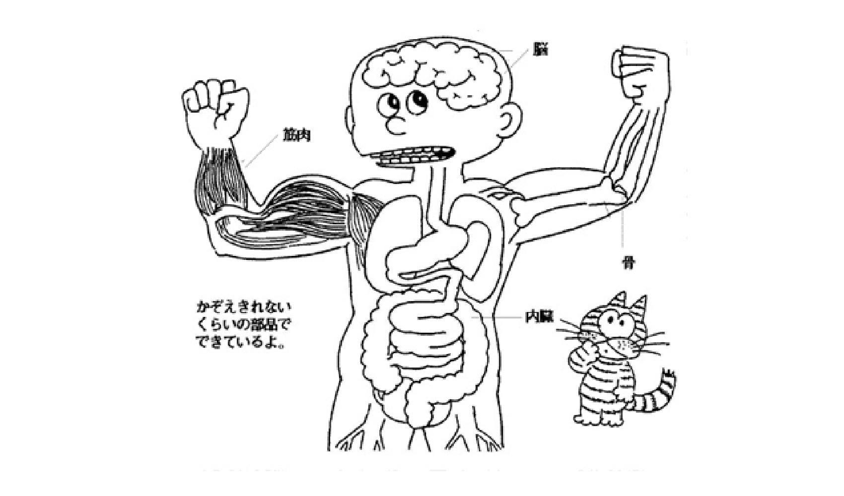 人間の体の中はどうなっているの