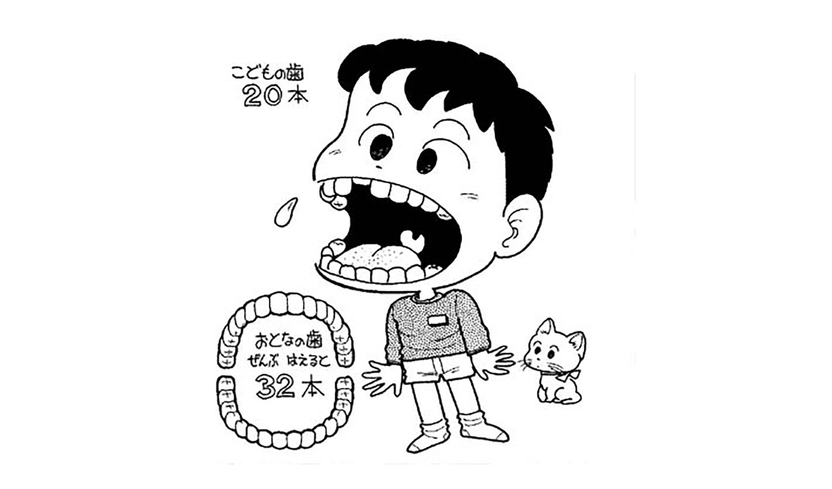どうして子供の歯ははえかわるの(大人ははえかわらないの)