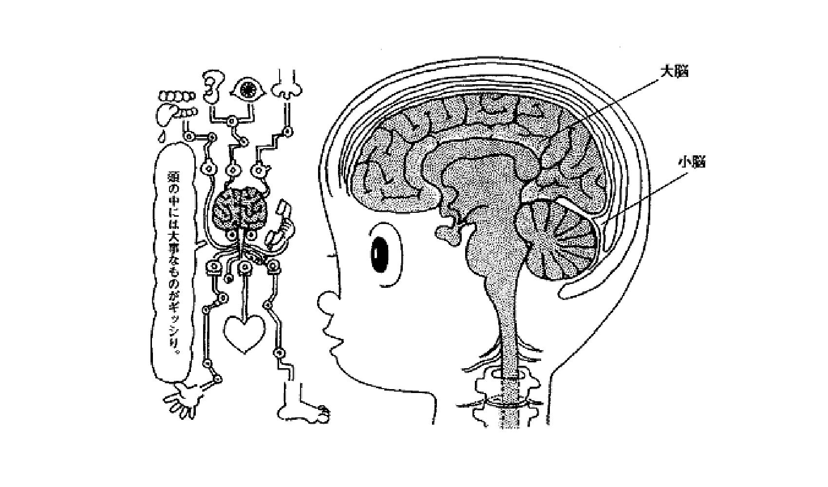 人間の頭の中はどうなっているの