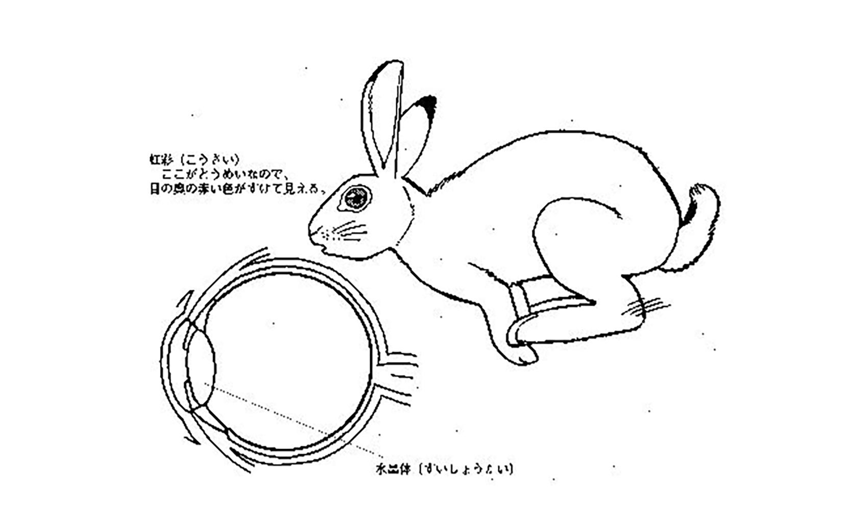 どうしてウサギの目は赤いの