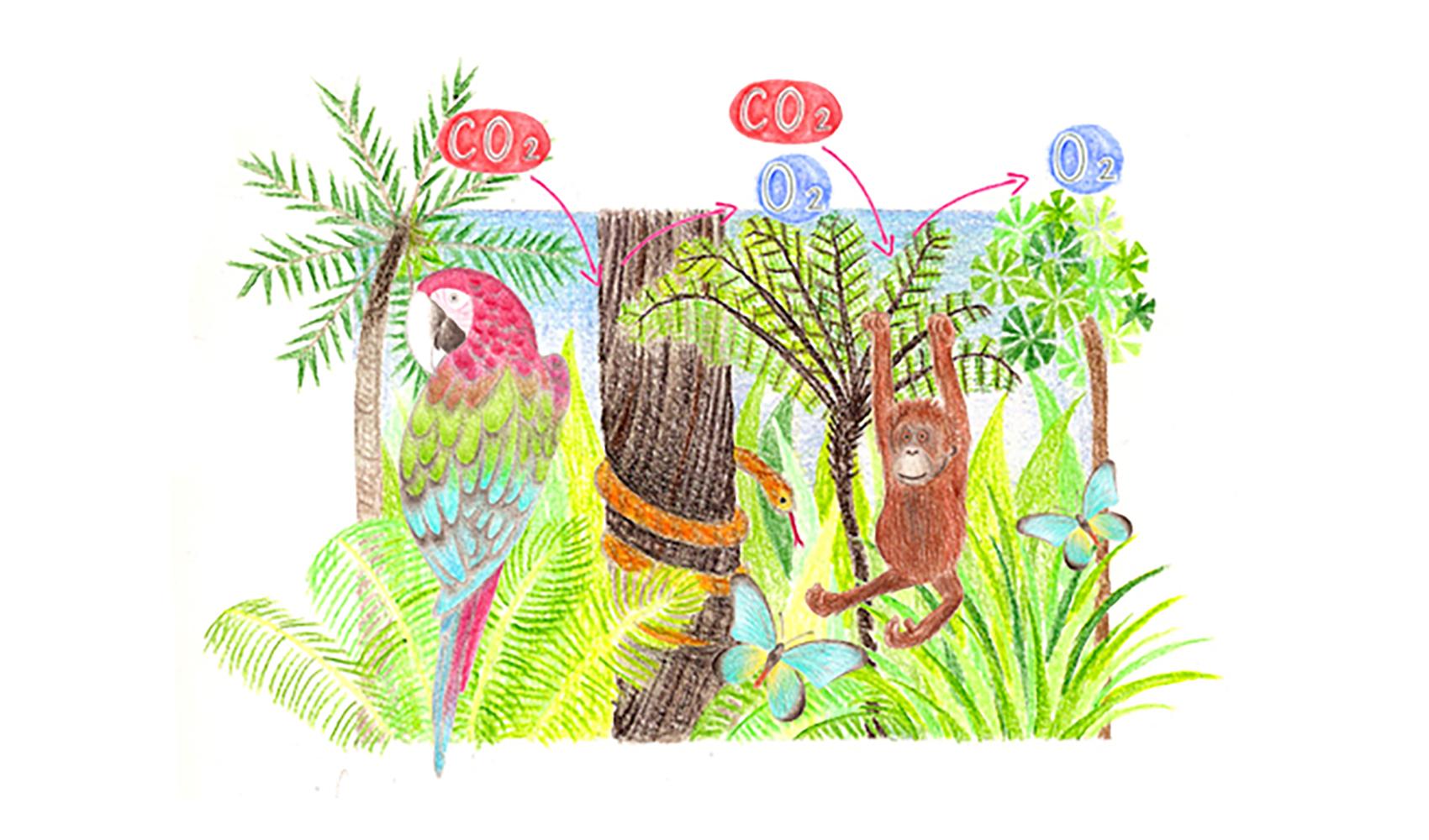 熱帯林はどんな働きをしているのですか?