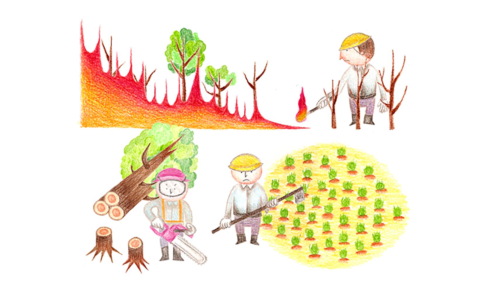 熱帯林は、どうして急にへっているのですか?(森林破壊)