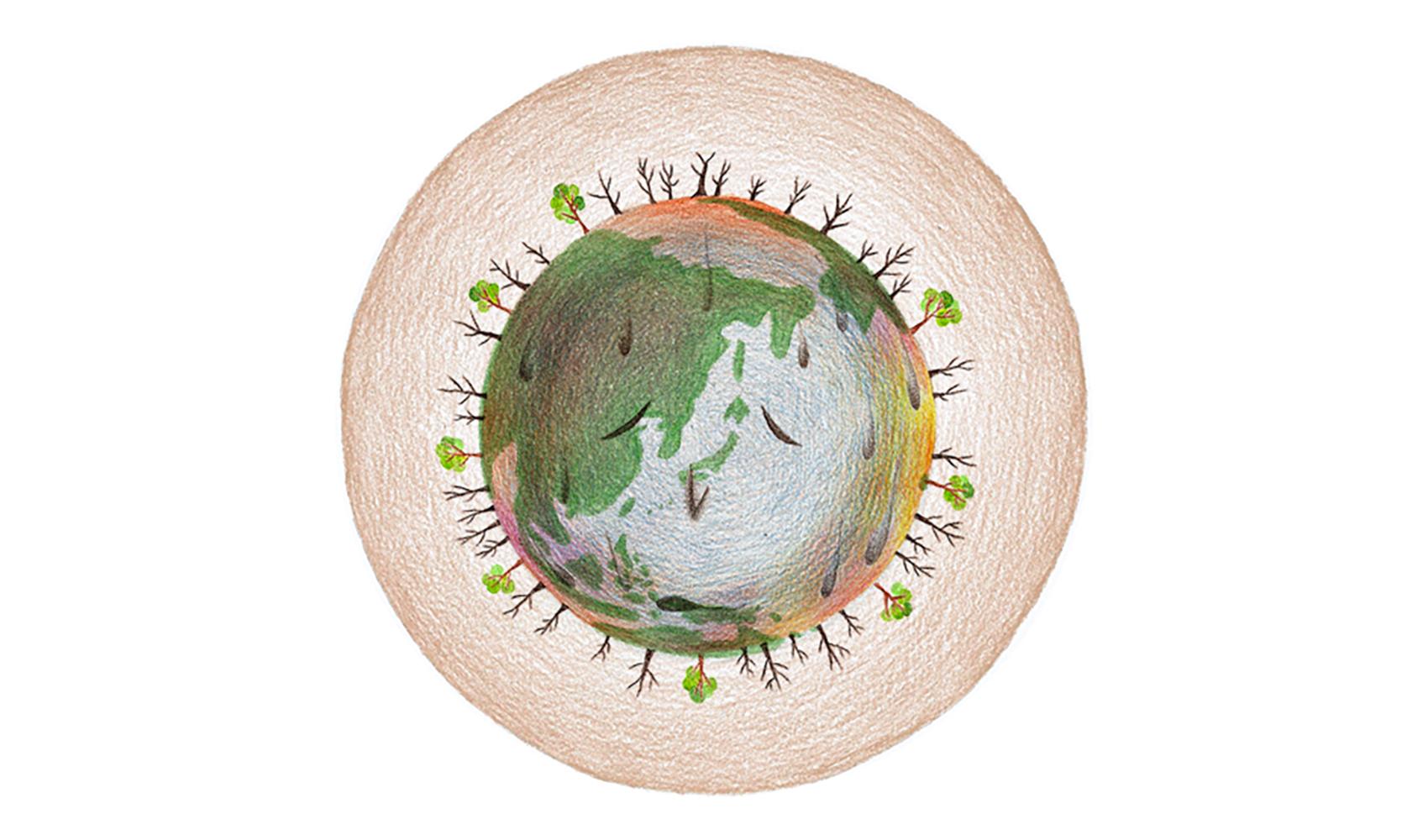 熱帯林が破壊されると、どうなるのですか?(森林破壊)