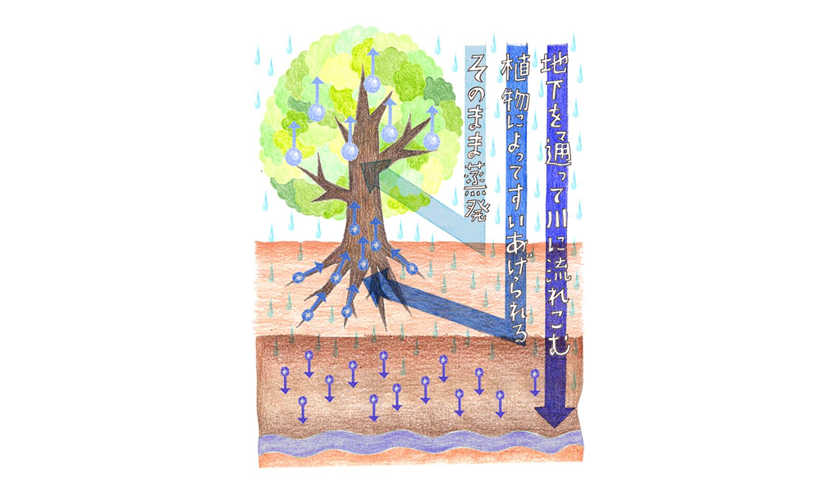 森がなくなると、なぜ洪水が起こるのですか?