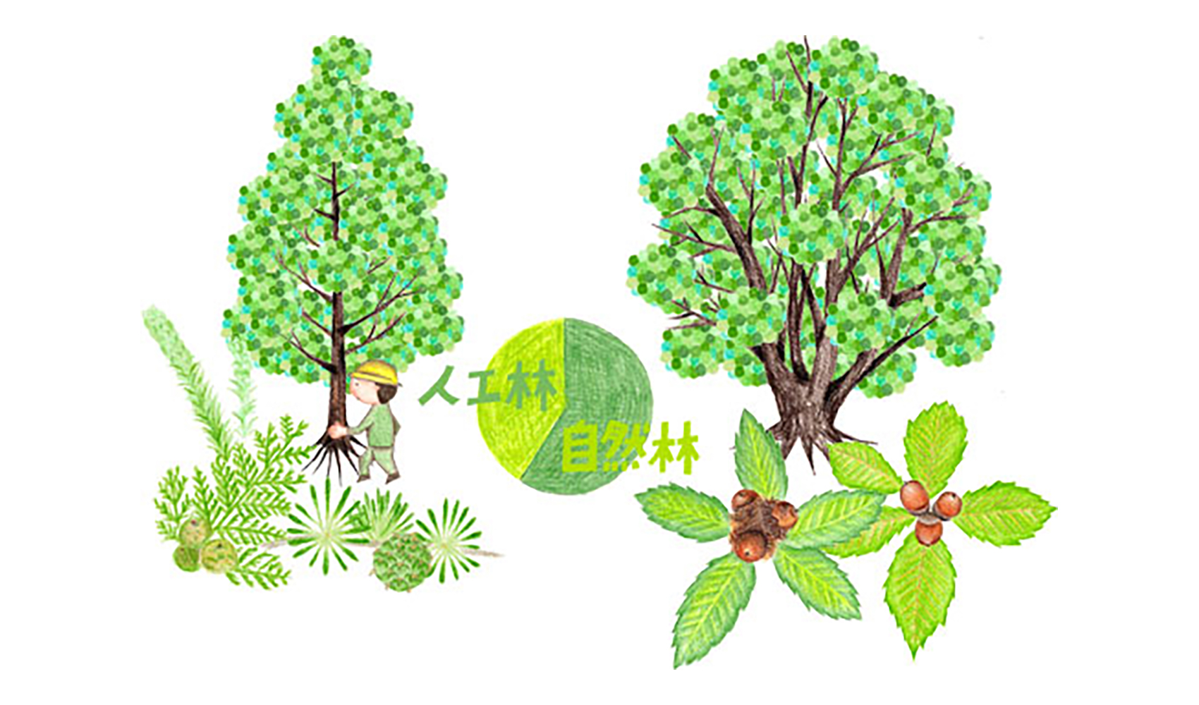 天然林・人工林とはなんですか?