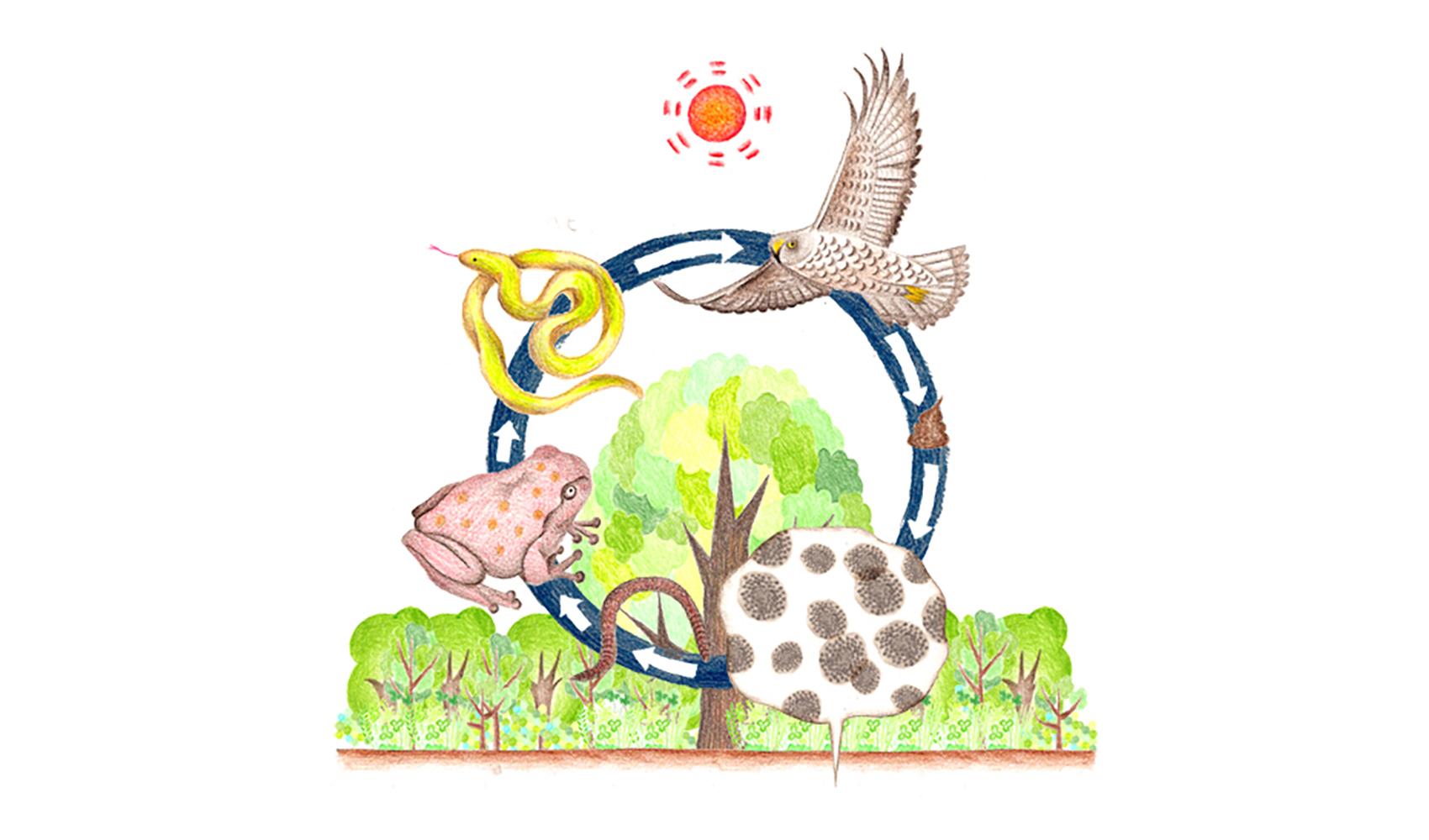 生態系って、何ですか?