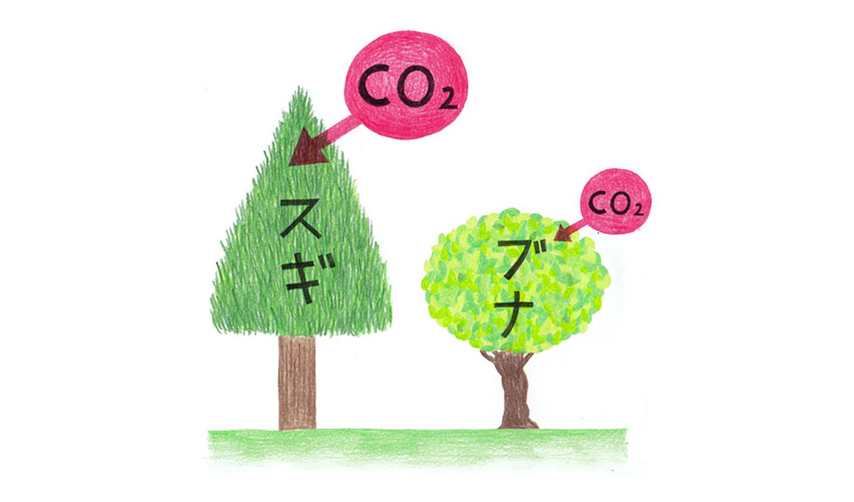 木の種類によって二酸化炭素の吸収量はちがうのですか?