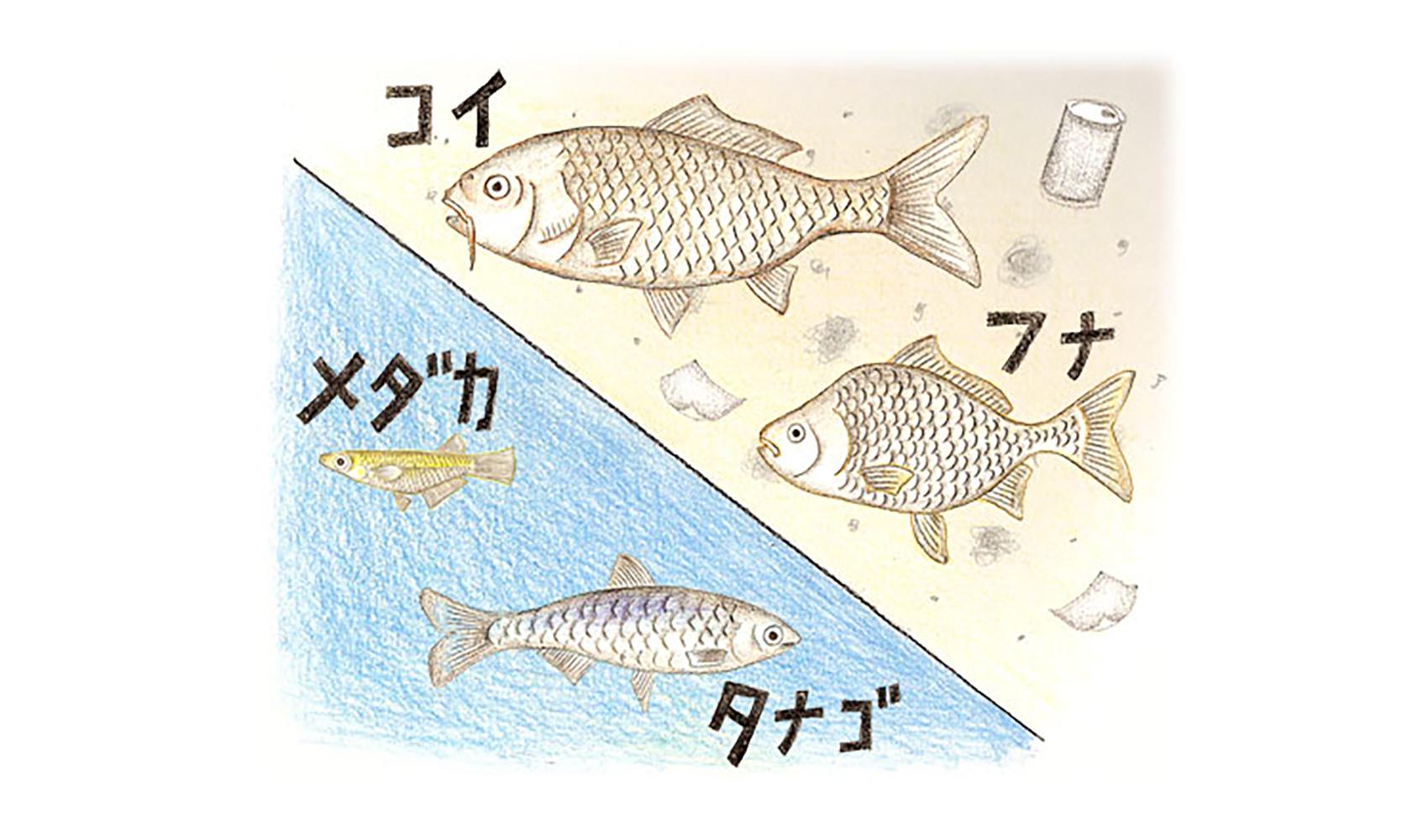 川のよごれによって住む魚はちがってくるのですか?