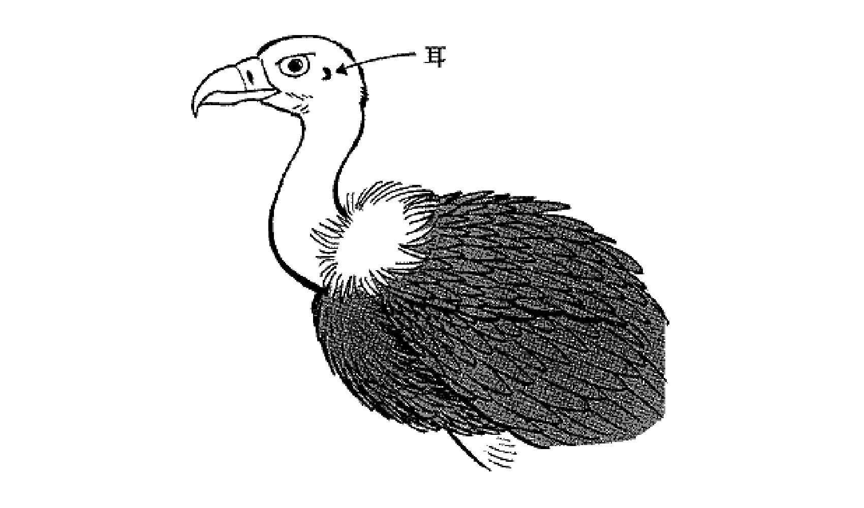 鳥に耳はあるの
