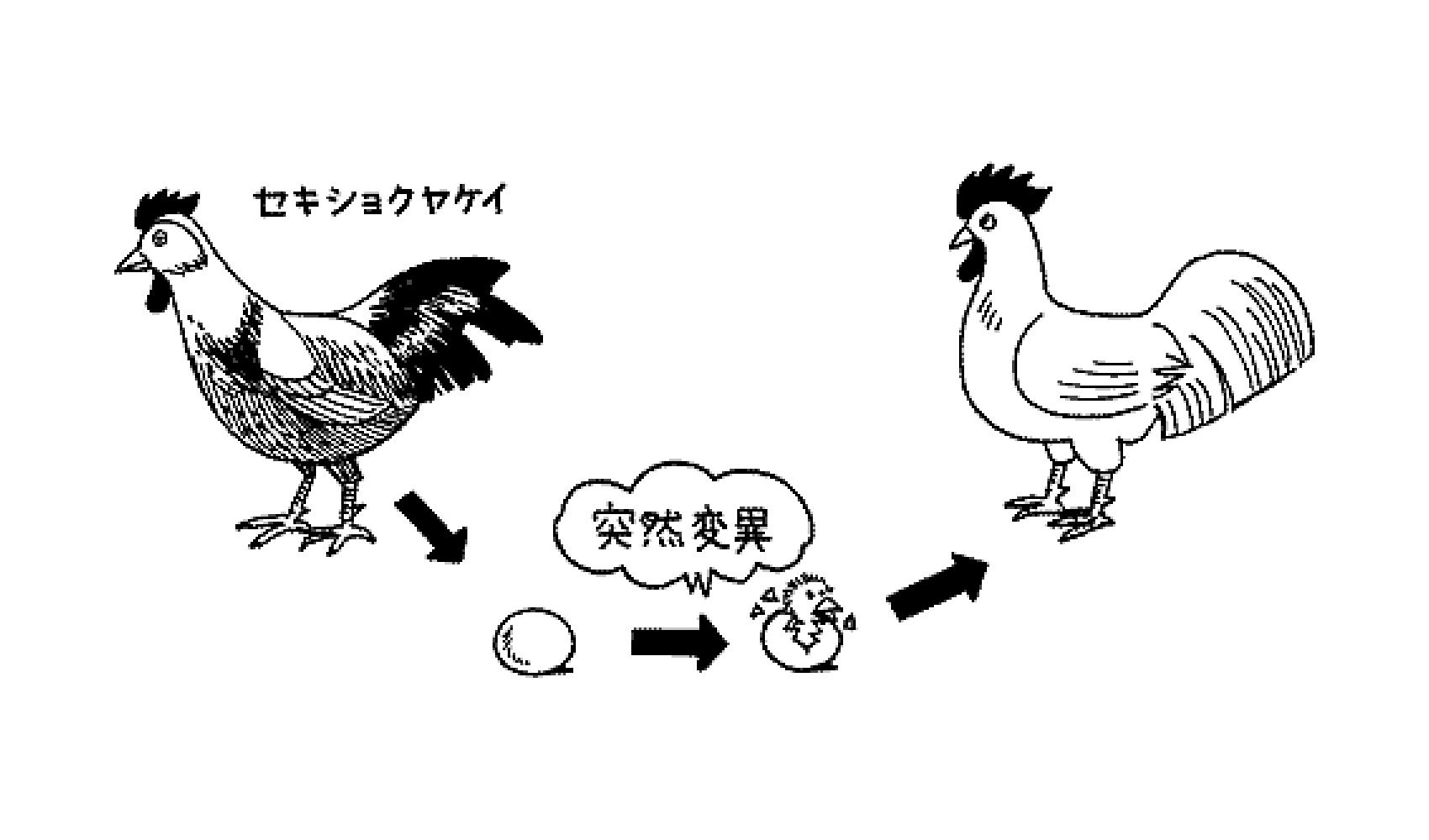 ニワトリとたまごはどっちが先にうまれたの | 空の動物 | 科学なぜなぜ ...