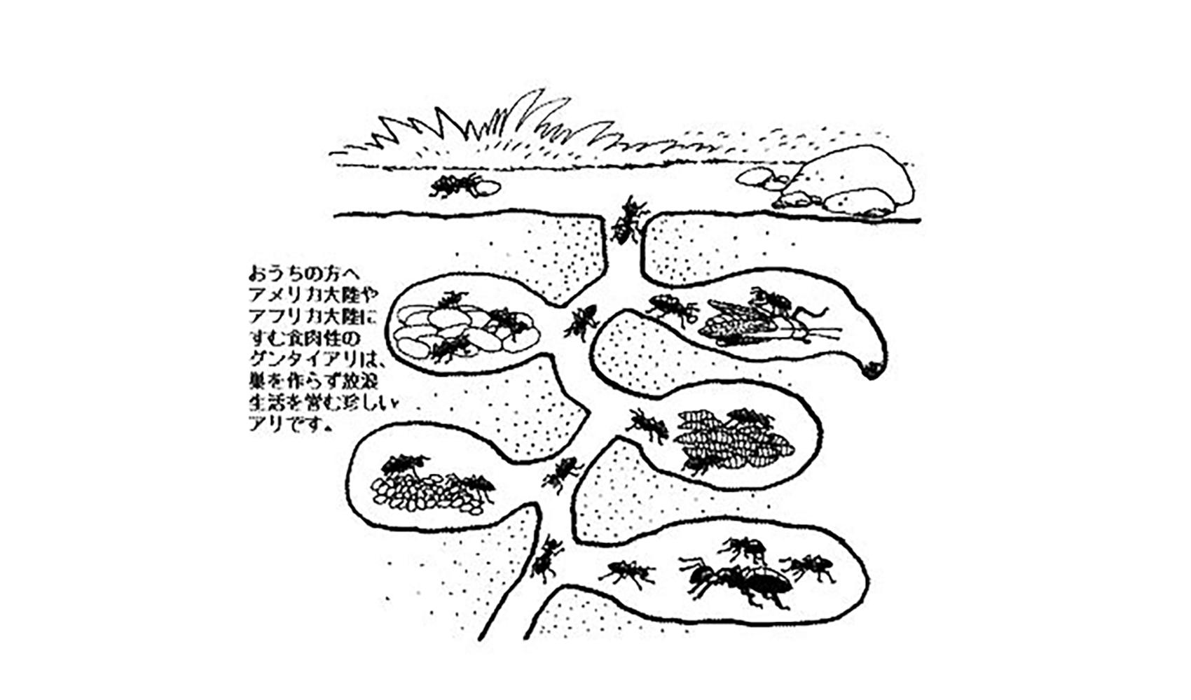 アリはどうして土の中にすをつくるの