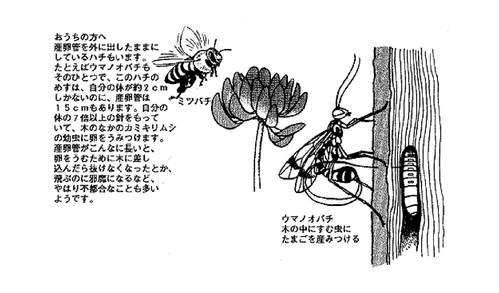 ハチはどうしてはりがあるの,どこにはりがあるの