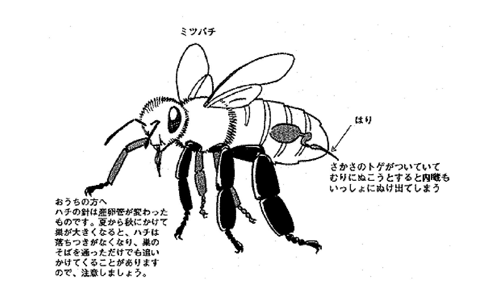 ハチはさすと自分も死ぬの