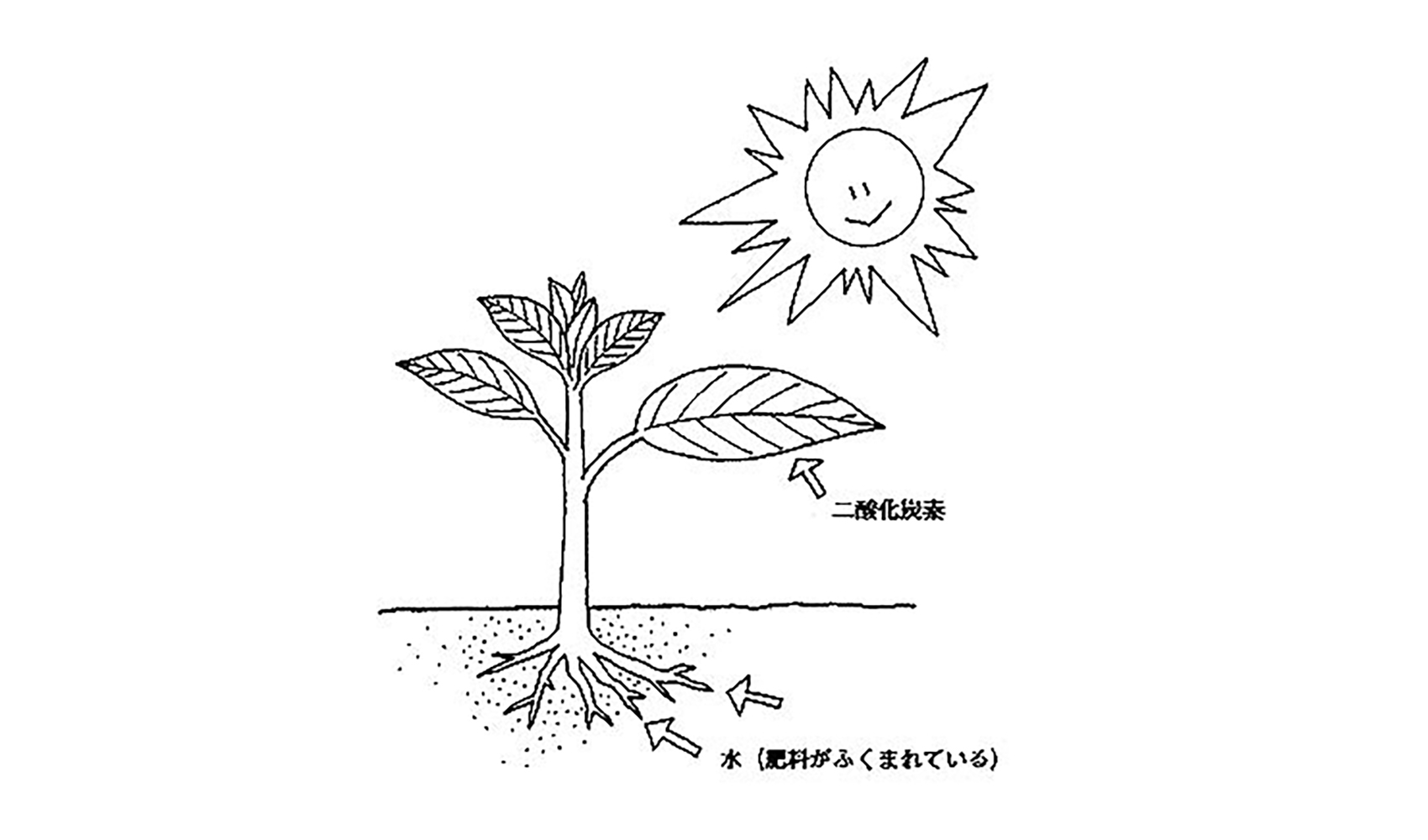 植物の成長にどうして水が必要なの