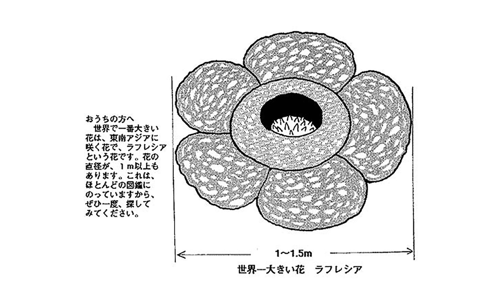 世界で一番小さい花は何
