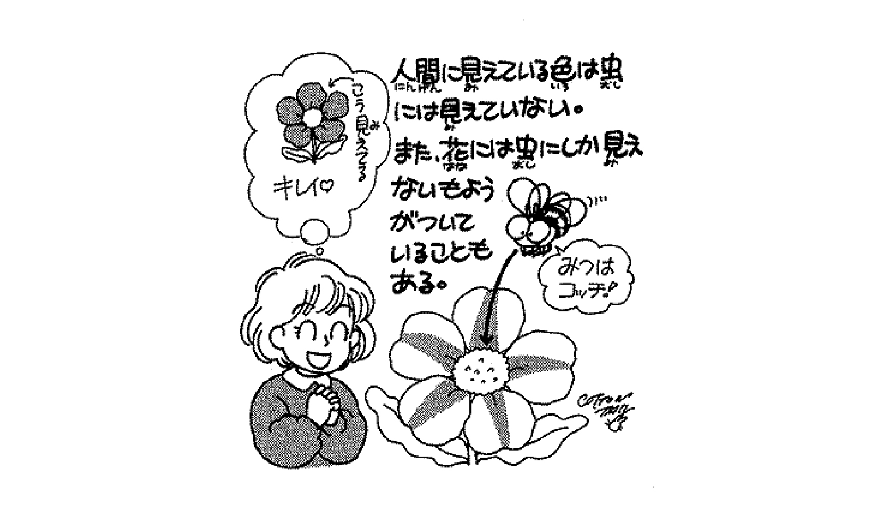 花はどうしてきれいなの