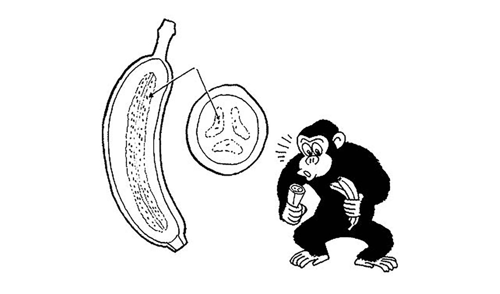 バナナに種はあるの,あるならどこにあるの