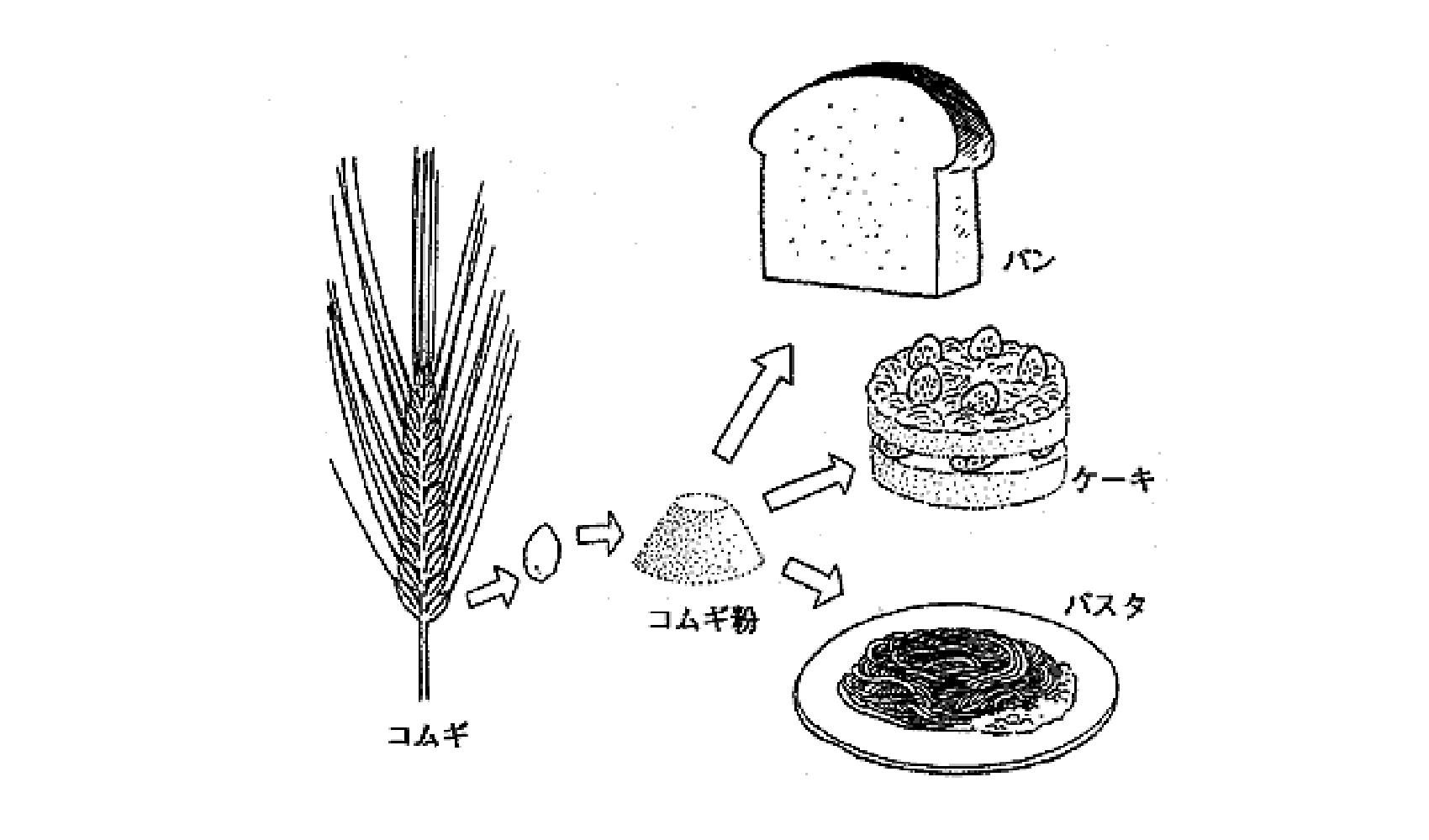 小麦粉は何からどうやってつくるの