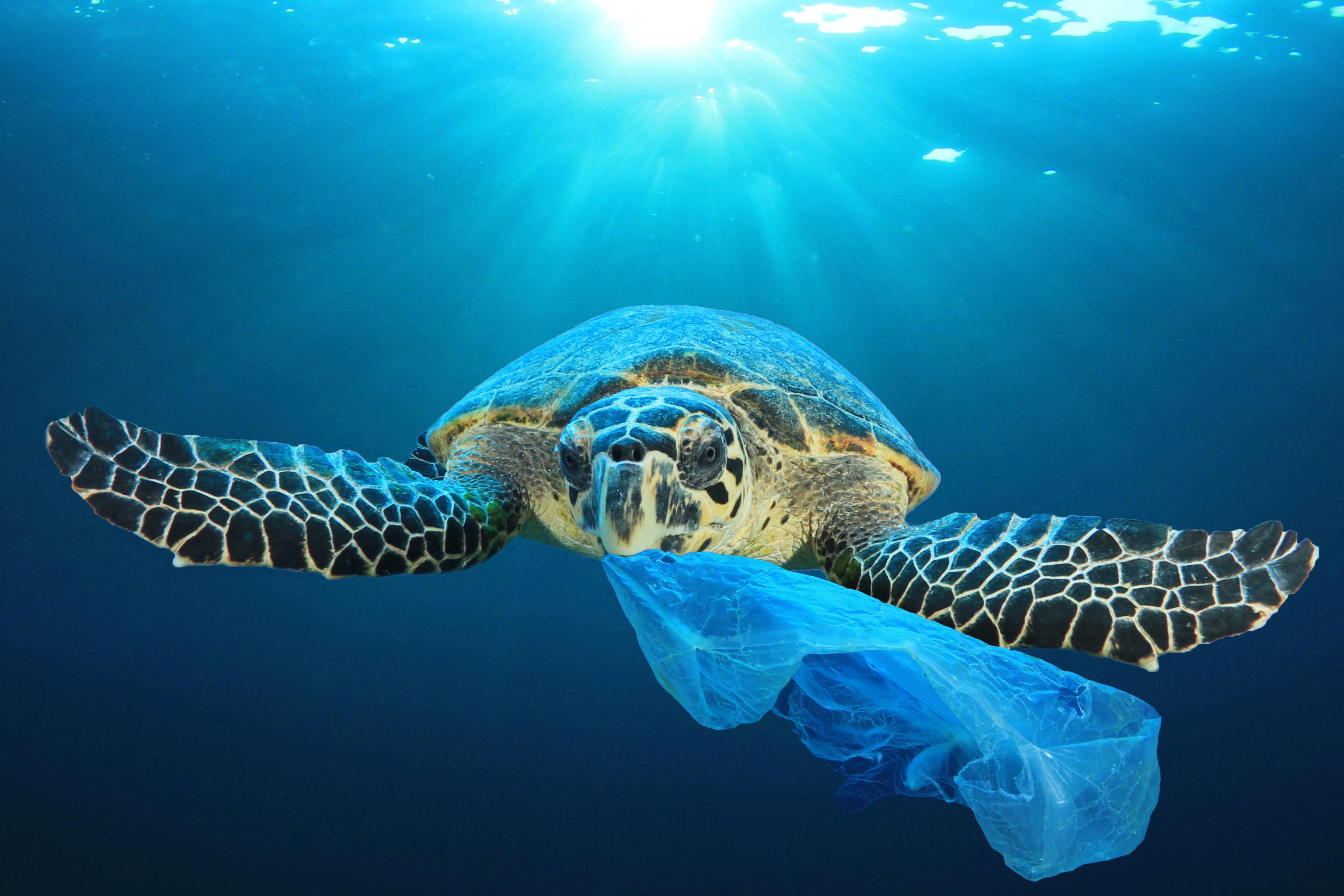 「地球防衛隊SDGs」第3話解説編「2050年には魚よりゴミのほうが多くなる?」