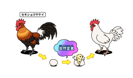 卵が先か、ニワトリが先か?