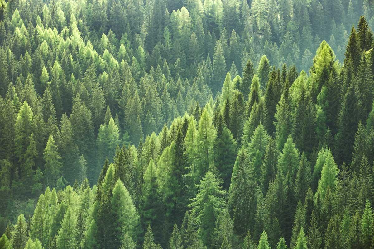 「地球防衛隊SDGs」第20・21話解説編「適切な森林管理で、生きものの暮らしを守ろう」